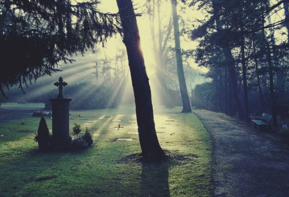 sunlight through trees in a cemetery
